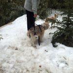 La plimbare cu hamul pentru sustinere totala in iarna lui 2011