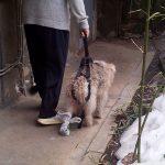 Plimbarea cu hamul special ce preia partial sau total greutatea pacientului