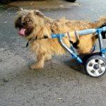 Proteze veterinare personalizate