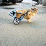 Carut pentru caine paralizat 0724995357