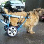 Proteze pentru orice animal www.pethelp.eu 0724995357
